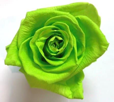 significado de la rosa verde
